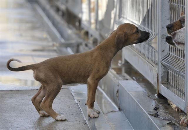 Resultado de imagen de perrera de mataro