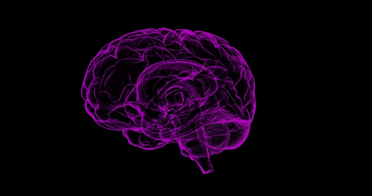 Cerebro Alzeihmer