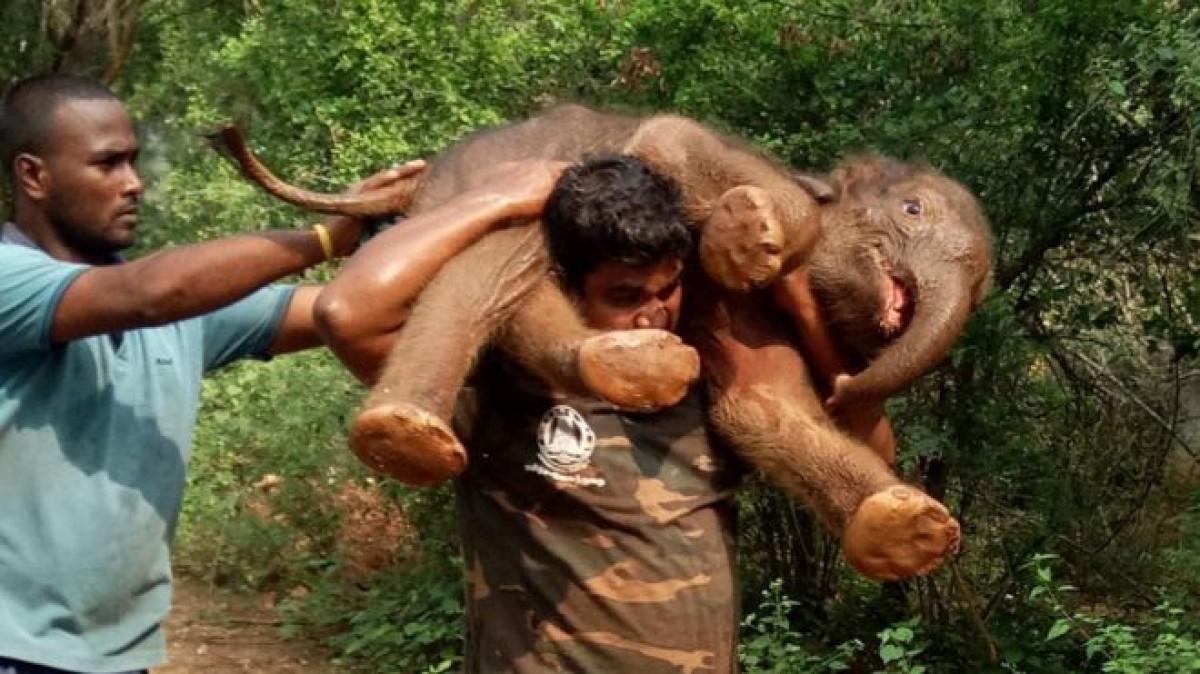 Un guarda forestal carga con un bebu00e9 elefante
