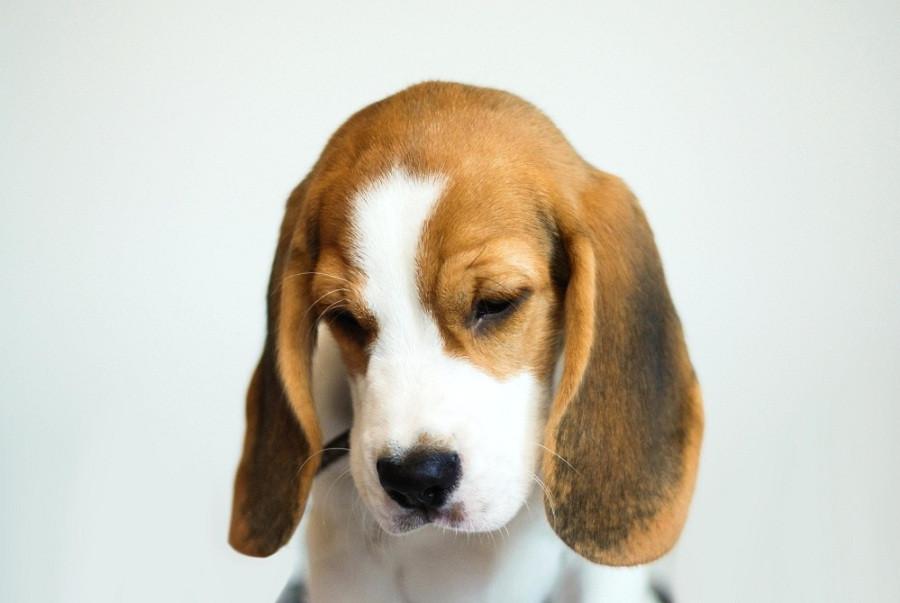 Cachorro perro mascota