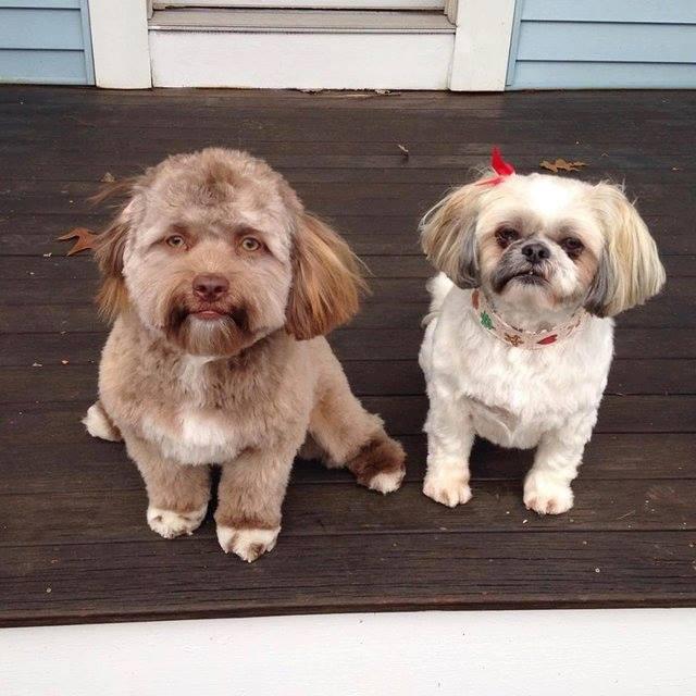Yogui, perro con cara de persona