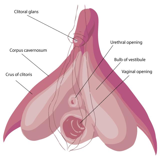 Are El clitoris de la mujer sorry, not