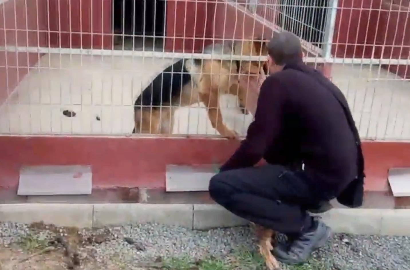Perro robado