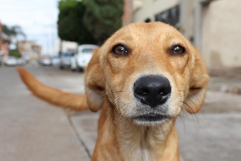 Maltrato animal perro 11052018