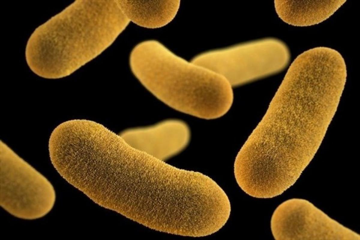 Bacterias antibiu00f3ticos muerte por infecciu00f3n 17052018