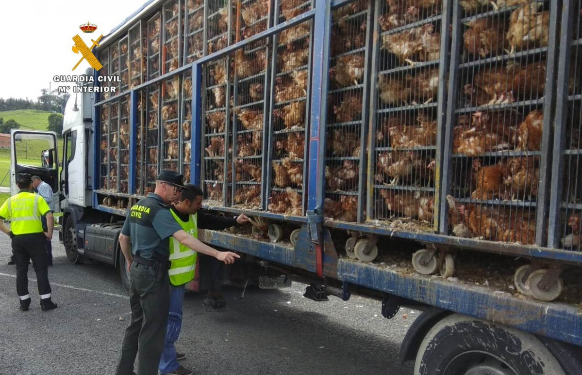 8.000 gallinas en mal estado