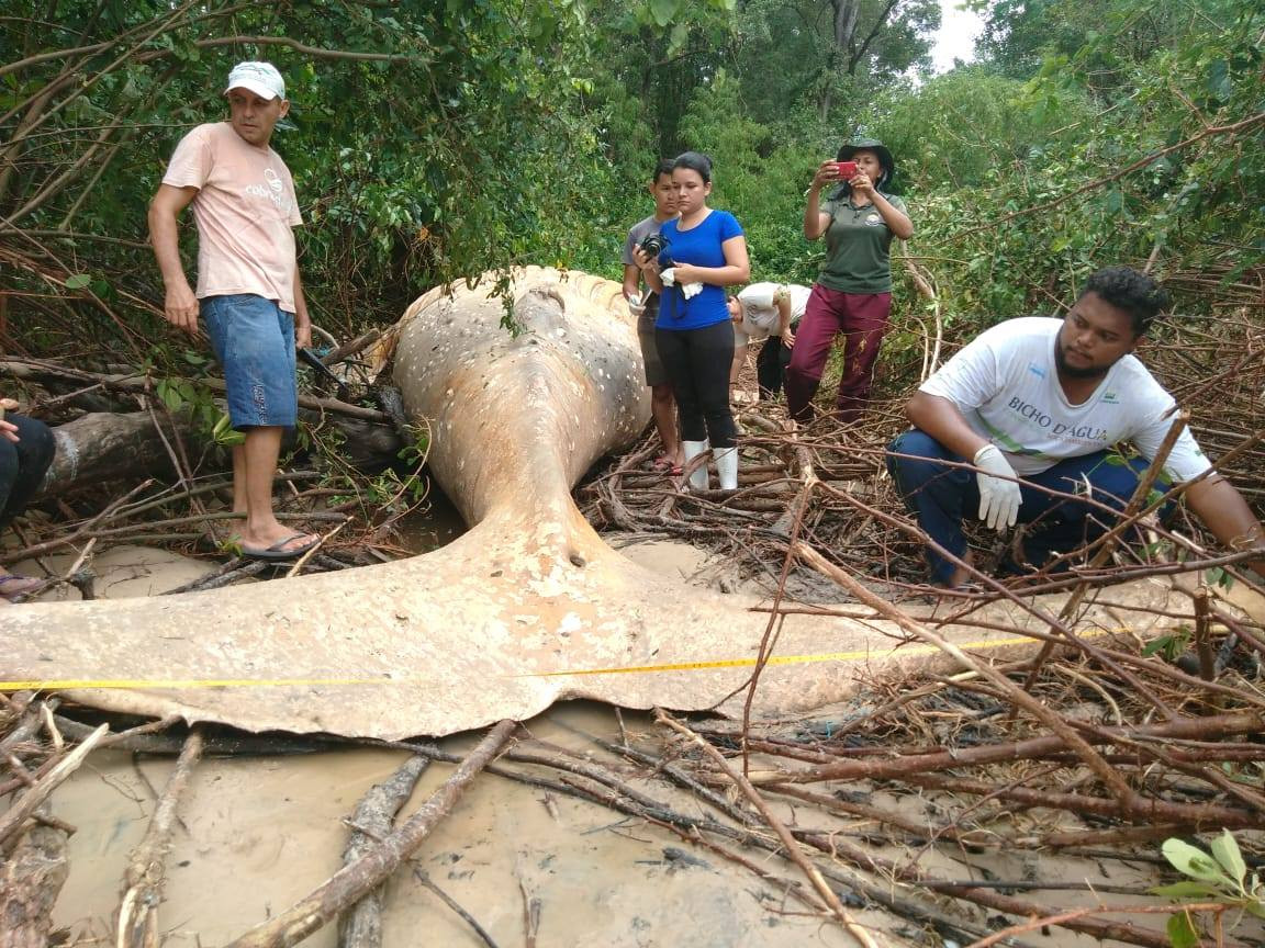 Aparece una cru00eda de ballena muerta en la selva amazu00f3nica
